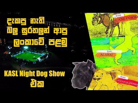 දැකපු නැති බලු සුරතලුන් ආපු ලංකාවේ පළමු KASL Night Dog Show එක | Pet Talk