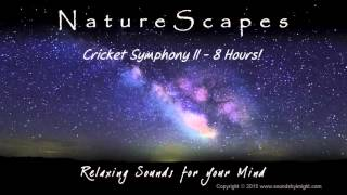 🎧 CRICKET SYMPHONY II - 8 Hours of Restful, Soothing Nighttime Nature Sounds