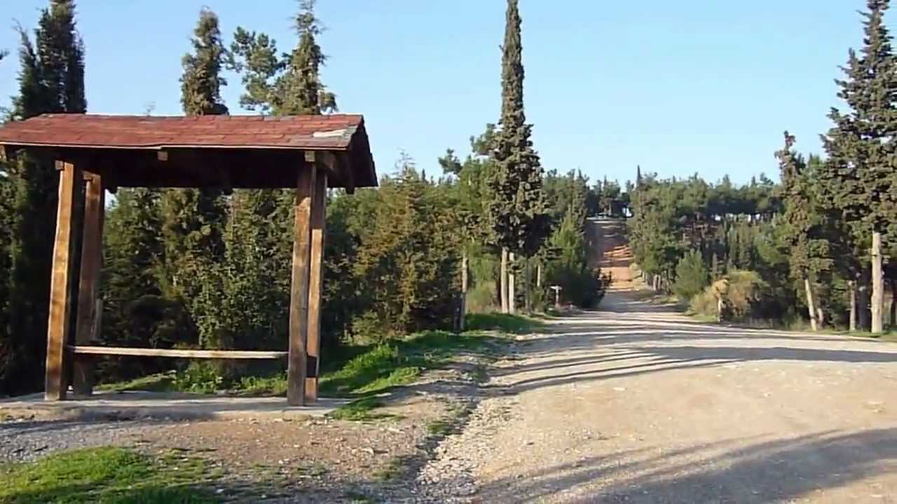 Θεσσαλονίκη: 70 μετανάστες έφθασαν στο... δάσος του Σέιχ Σου