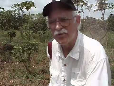 Inspecting a neglected Jatropha plantation in Ghana.mp4