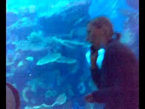 (Dubai mall-aquarium)