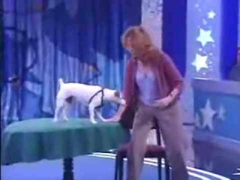 Genius dog shows off on pet talent show