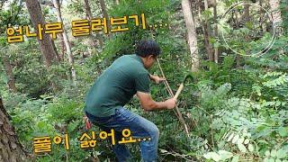 산에 주말농장 만들기, 엄나무 현황, 임야토지 가꾸기,…