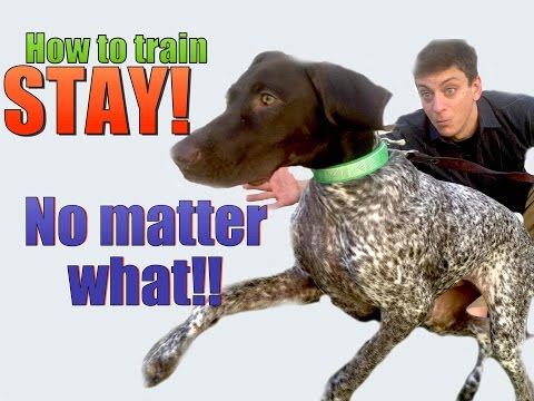 How to Teach your Dog to STAY- NO MATTER WHAT!