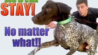 How to Teach your Dog to STAY NO MATTER WHAT!
