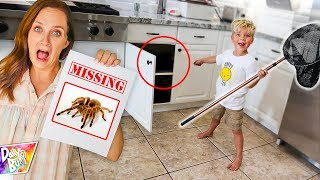 Trapped GIANT SPIDER Lost In the Kitchen!
