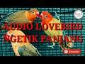 Audio Masteran Lovebird Ngetik Panjang Rangsang Ngekek  Mp3 - Mp4 Download