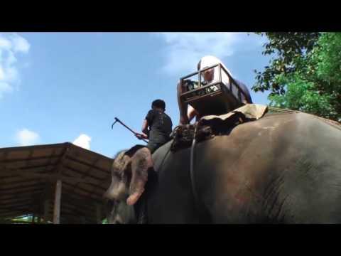 Wildlife Tourism is Cruel - #WildlifeNotEntertainers