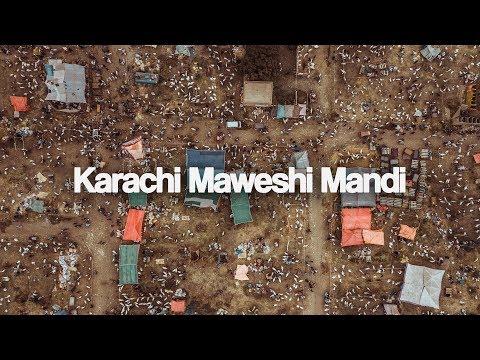 MANDI KI KAHANI - Karachi Maweshi Mandi