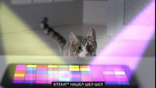 Да, это энергия кота!