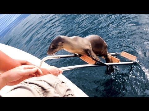Injured sea lion