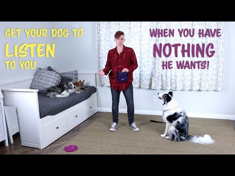 Train your dog to listen when you have no treats