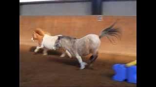 Ponys?...Oder doch Flughörnchen?