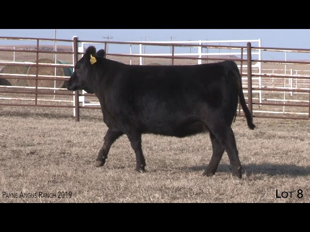 Payne Angus Ranch Lot 8