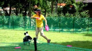 2011年8月27日、28日に四国ディスクドッグクラブ(SDDC)の方々が開催し...