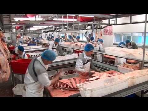 Profit from production - Beef processing and packing
