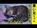 【猫 泣ける話】悪い兄ちゃんでごめんな・寂しい思いをさせてごめんな(猫 感動 泣ける話 保護 涙腺崩壊 感涙