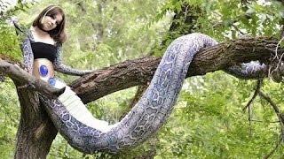 Download Video Moitié femme, moitié serpent MP3 3GP MP4