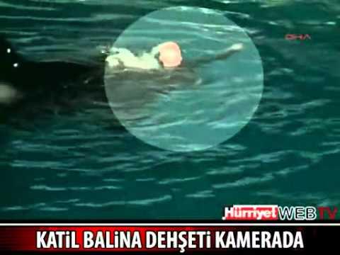 Orka attack seaworld (2012) // Katil balina saldırısı (2012)