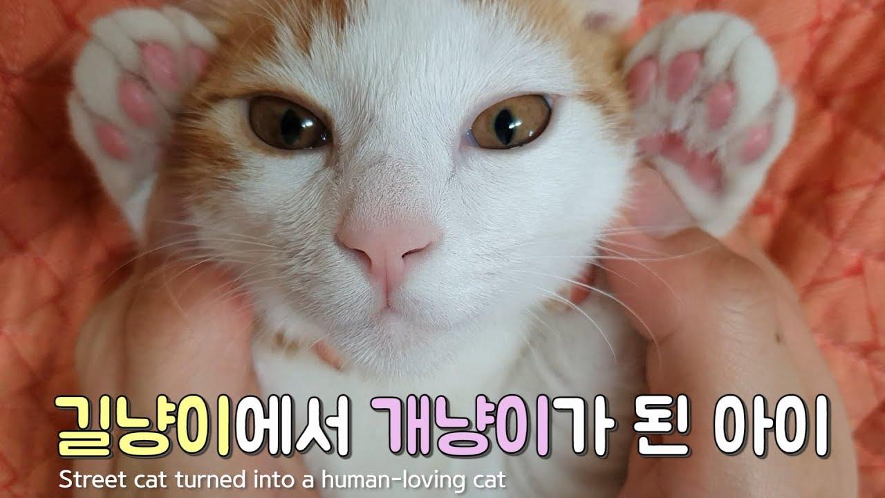 길고양이 구조해서 개냥이로 키울수있을까? 지구최고 미묘 아기고양이 / I rescued a street