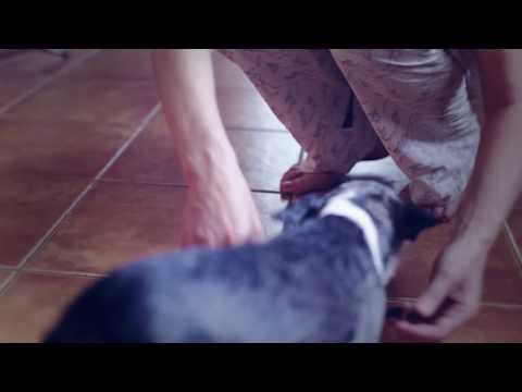 Как постричь когти собаке чихуаиз YouTube · Длительность: 5 мин31 с  · Просмотры: более 3000 · отправлено: 20.03.2016 · кем отправлено: мама Бонниты