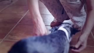 видео Приучение к поводку и ошейнику