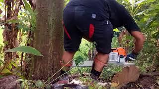 Video kecelakaan dalam penebangan pohon download MP3, 3GP, MP4, WEBM, AVI, FLV September 2018