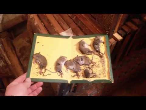 Эффективный способ борьбы с мышами в сотохранилище