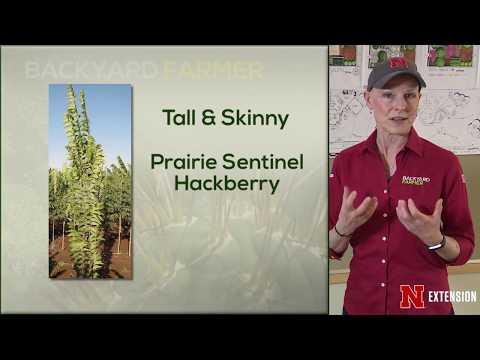 Landscape Lesson Tall & Skinny