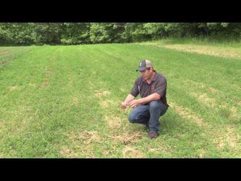 Alfalfa Food Plot