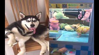 [navel Attention] Interesting Collection of Dog and Cat Best Videos. [ Kelb u qattus umoristiċi ]