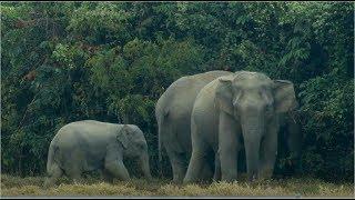 Elephants and Us_Assam