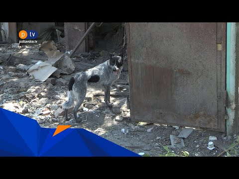 PTV Полтавське ТБ: Жителі Червоного Шляху проти, аби 65 собак перевезли до їхнього селища