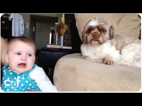 Baby Argues with Dog   Quit Your Bellyaching
