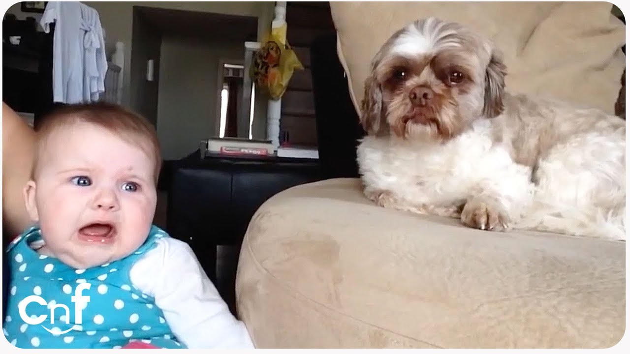 Baby Argues with Dog | Quit Your Bellyaching
