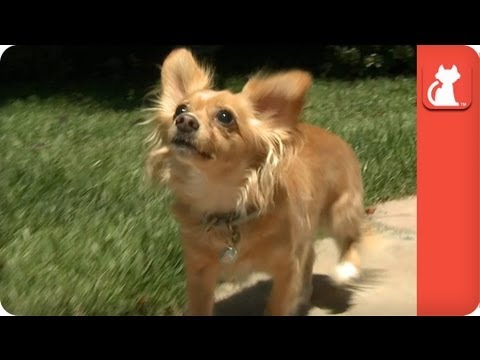 Owner Refuses to Pay $20 to Pick Up Blind Dog at Shelter - Tails of Hope