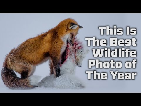 The Results For The Wildlife Photo Of The Year Competition Are In