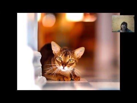 Таро Языческих Кошек Tarot Of Pagan Cats Галина Гуржий