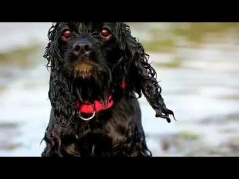 Dog Tricks By Bella Boo