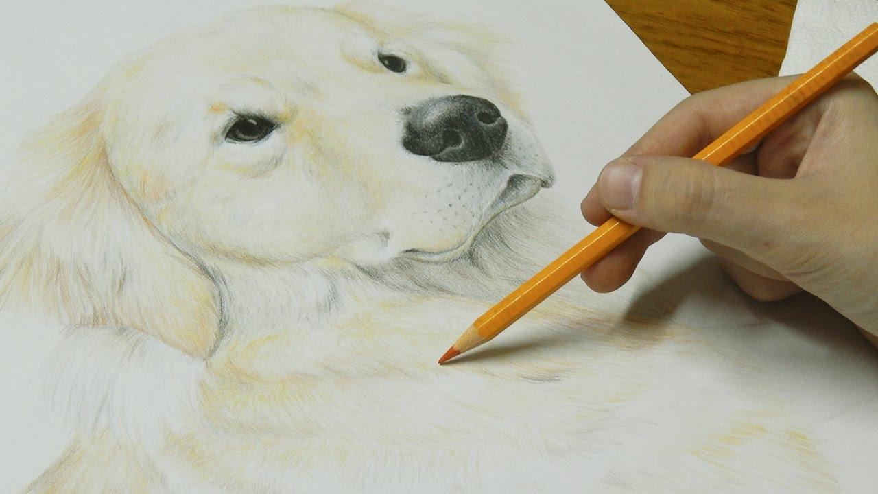 Desenhando Um Cachorro Realista Youtube