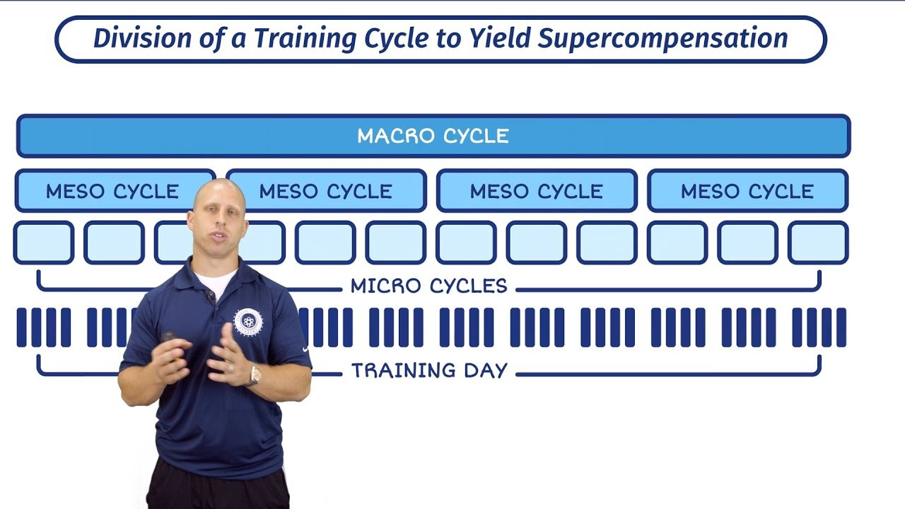 Macro, Meso and Micro Cycles | Training Periodisation With Mike Zourdos |  The SBS Academy