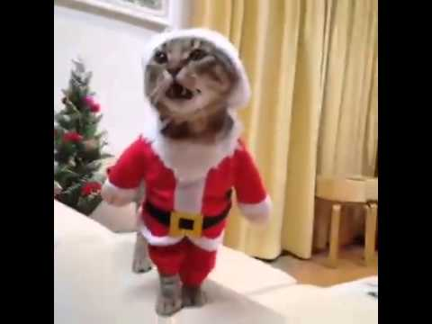 santa cat youtube