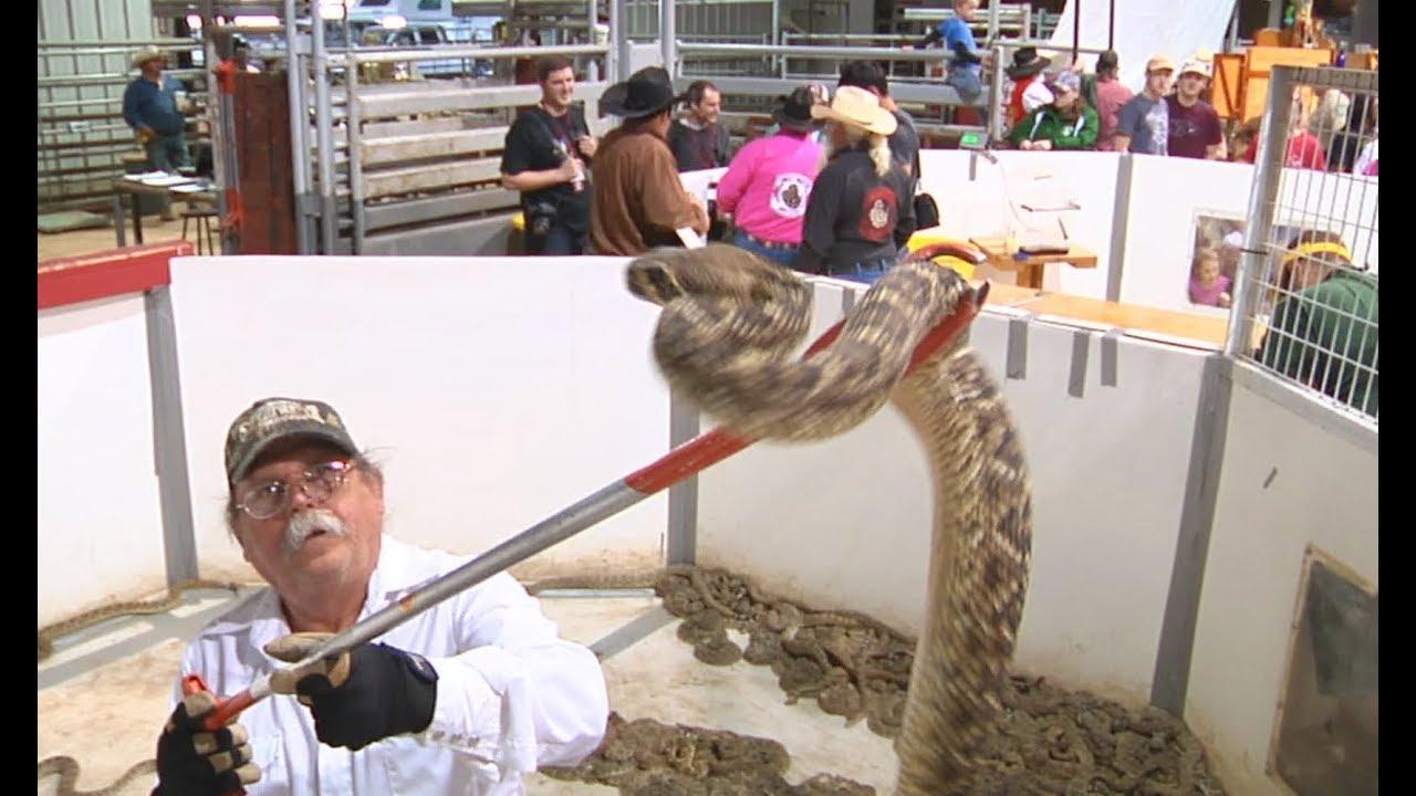 Rattlesnake Festival Oklahoma 2020 RATTLESNAKE ROUNDUP   Sweetwater, TX   YouTube