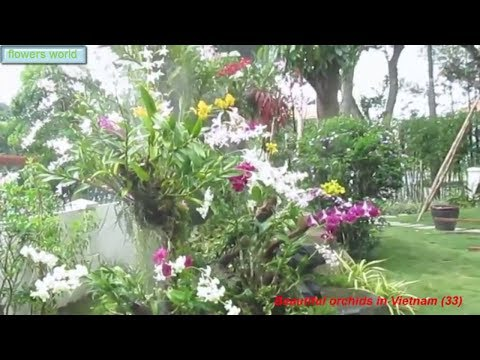Beautiful orchids in Vietnam (33)|Beautiful garden space.