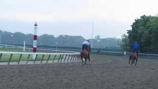 Opossum crosses track in front of California Chrome