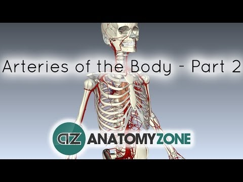 Arteries of the body - PART 2 - Anatomy Tutorial