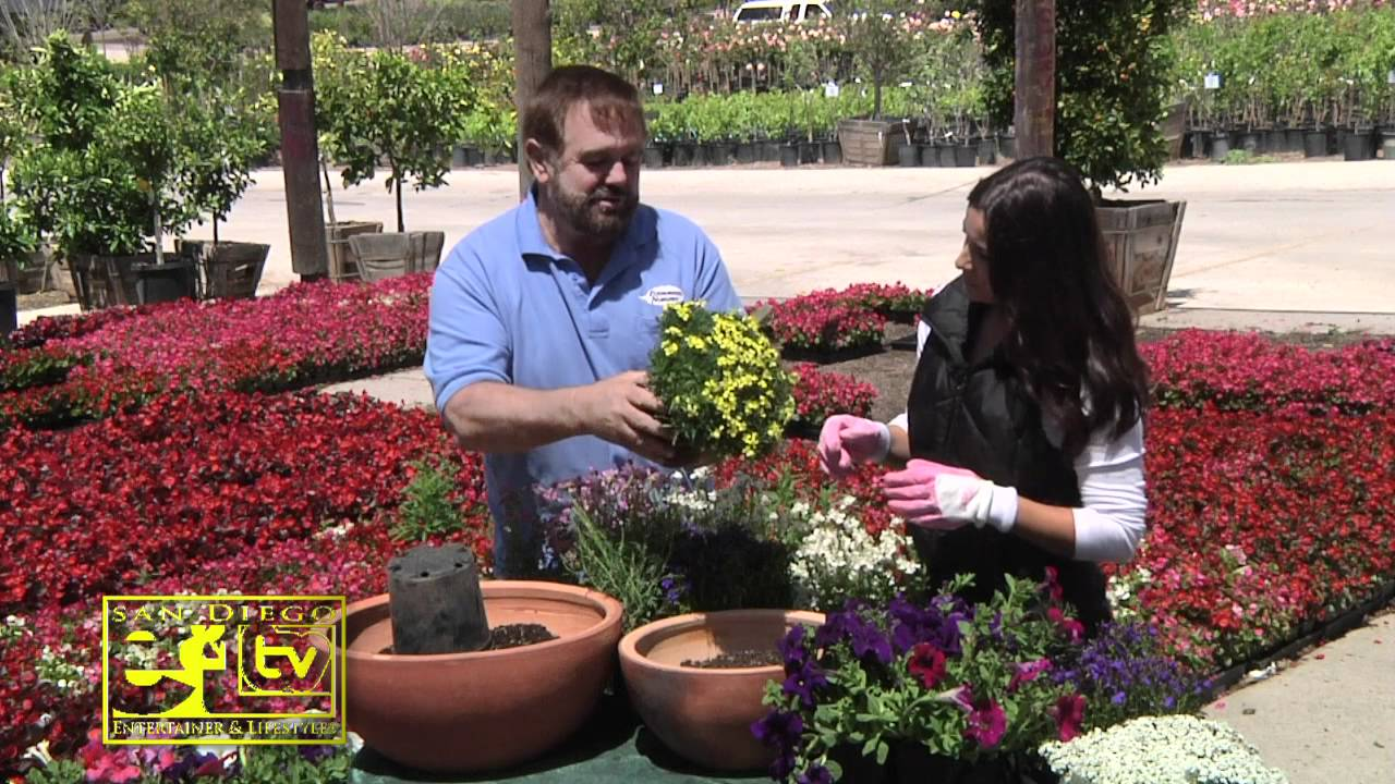 May E L Tv Show At Evergreen Nursery