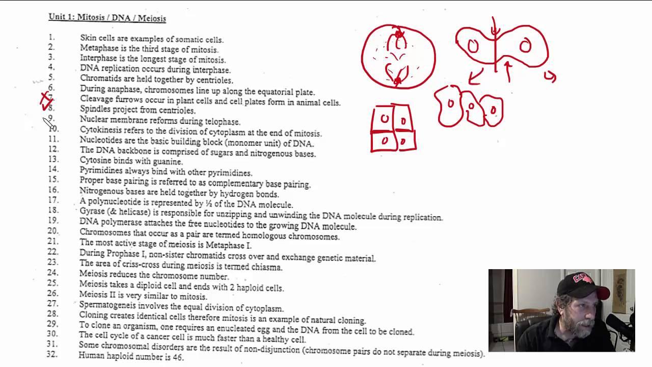 medium resolution of GR 11 True or False Review for Grade 11 Biology Exam (Science Video  Tutorial) - YouTube