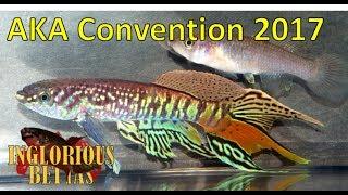 American Killifish Association (AKA) Convention 2017 Highlights