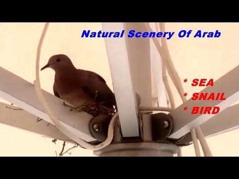 ►Natural Scenery Of Arab I Nature I Bird I Snail